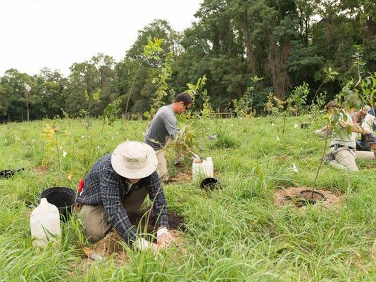 6. Mt. Cuba Center Reforestation Project