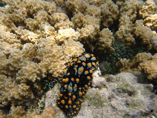 GUATab_05-10-2016_PDN_1_A001--2016-05-09-IMG_Reef7_JPG_2_1_6SEAANSE_L8078775