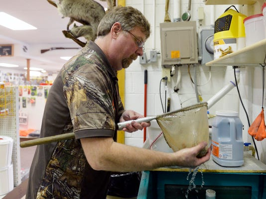 Hake's Sporting Goods sales manager Jeff Barbour removes live-bait fathead minnows from the store's tank for a customer on Friday, April 3, 2015, in Wrightsville. Saturday is opening day for trout season. Chris Dunn Ñ Daily Record/Sunday News