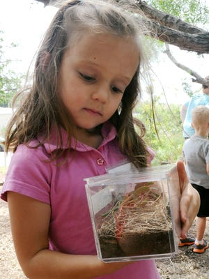 Emma Bounds looks at the insect habitat she created for some pill bugs she captured at River Bend Nature Center's Critter Camp in this file photograph. This year's Critter Camp starts June 12.