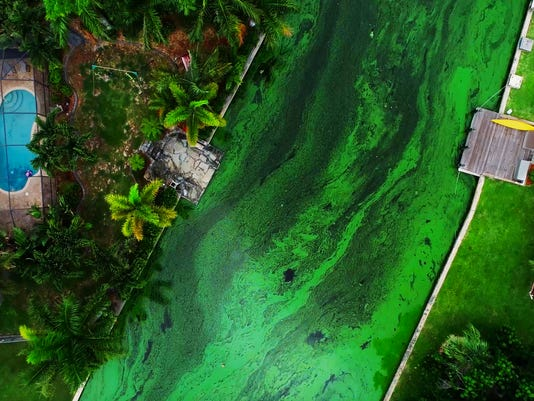Algae-Bloom.jpg