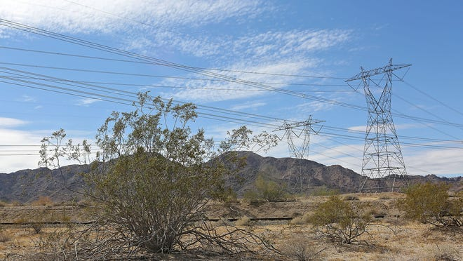 A creosote bush is dwarfed by large transmission towers and lines that carry electricity along the I-10 corridor about 45 miles east of the Coachella Valley, Thursday, October 8, 2014