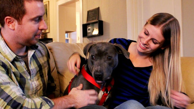 Summer, a pit bull-terrier mix who ran away from her foster home was lost for almost four months. She is now back with her foster owners Corinne Hashenberger and Steve Staten at their home in Salem on Tuesday, Jan. 13, 2015.