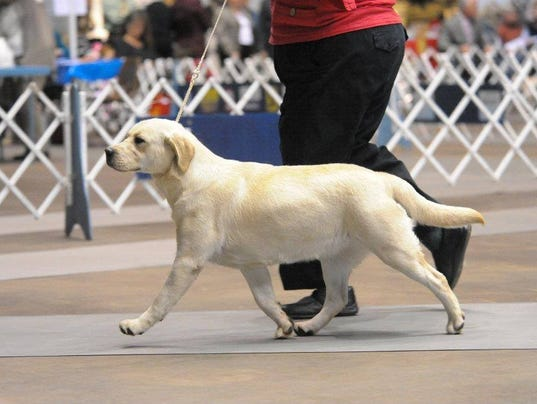 Monroe Kennel Club Dog Show