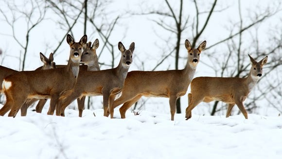 Residents can take part in a webinar on deer management Wednesday.