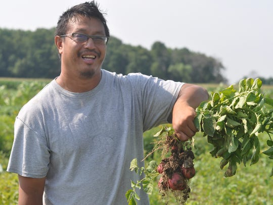 Vang Lee pulls potatoes out of the ground on his family's
