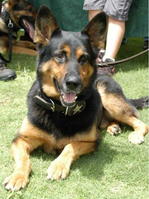 Dax, an Okaloosa County Sheriff's Office K-9, suffered a broken leg after falling through a attic while tracking a burglary suspect in Destin.