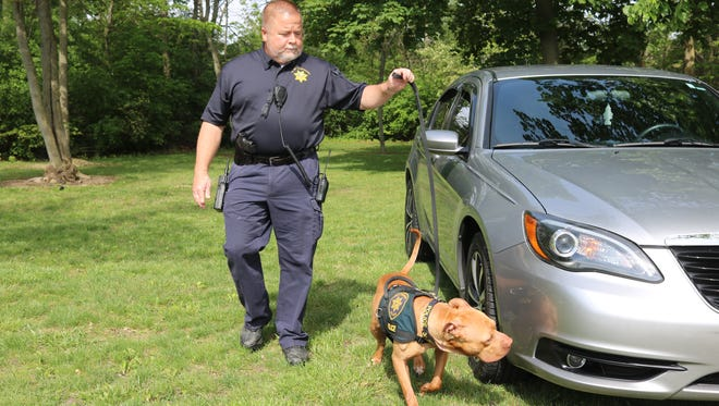 Clay Township Police Chief Terry Mitchell and recently adopted K-9 Leonard, Ohio's first pit bull to serve as an official police dog, check a car for the presence of narcotics.