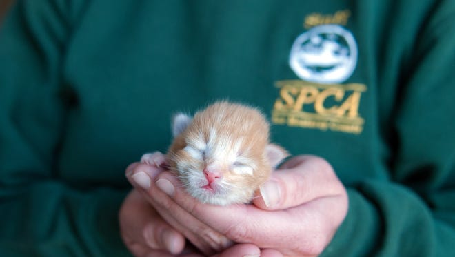 SPCA for Monterey County is holding a kitten shower for needed supplies.