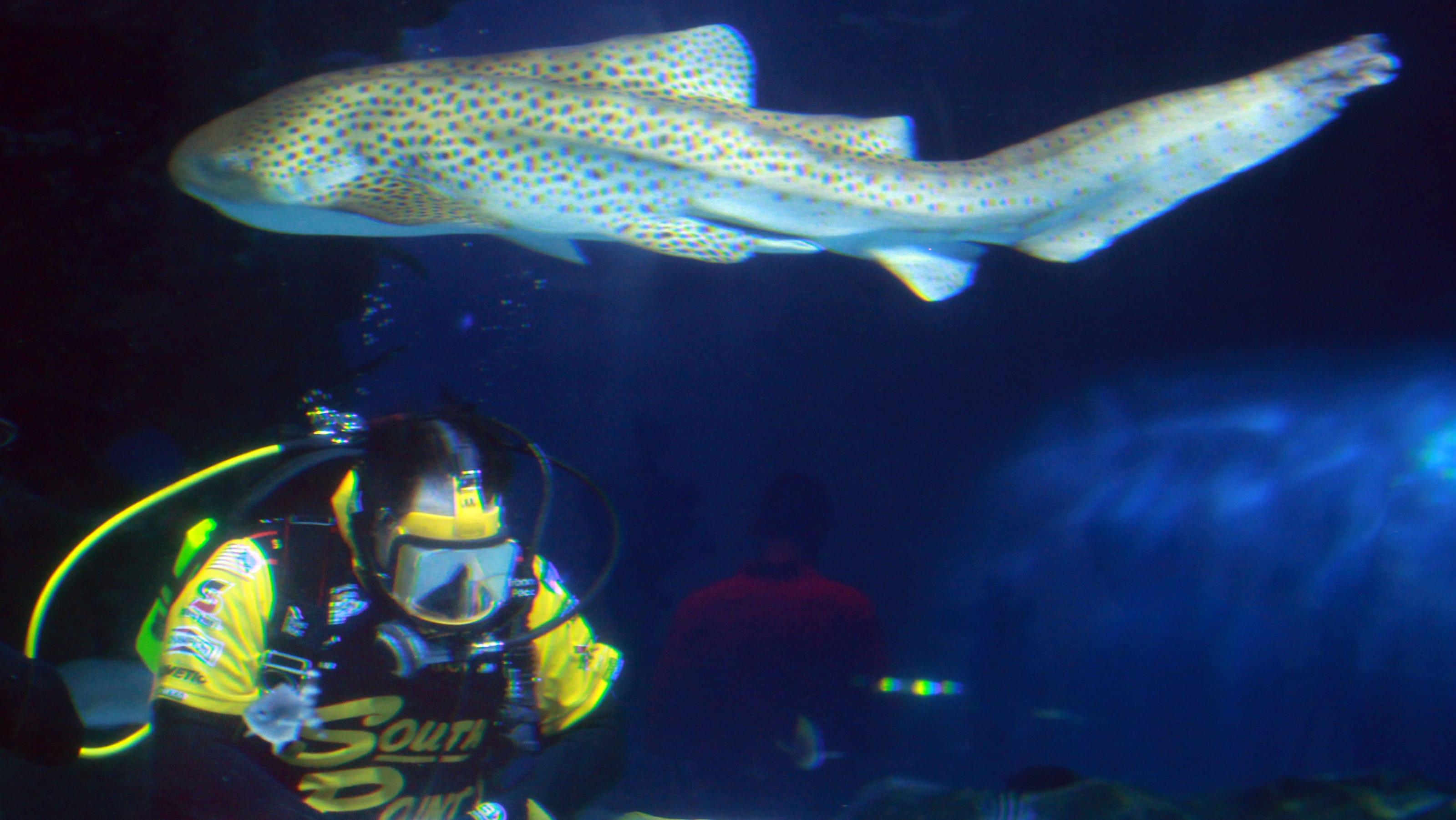 Aquarium Related Keywords & Suggestions - Cincinnati Aquarium ...