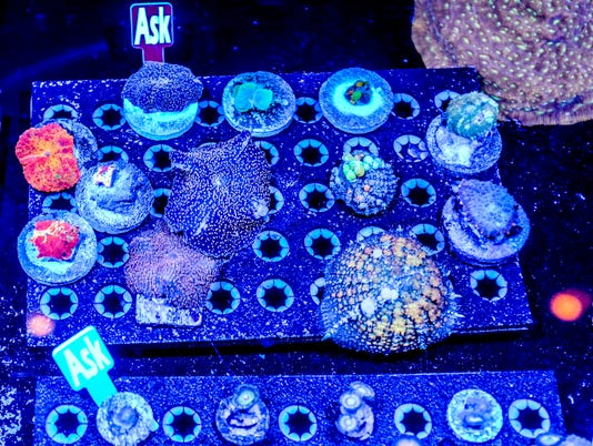 636231214520585682-coral-expo-3.jpg