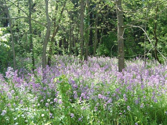 06.14.15 - wildflowers