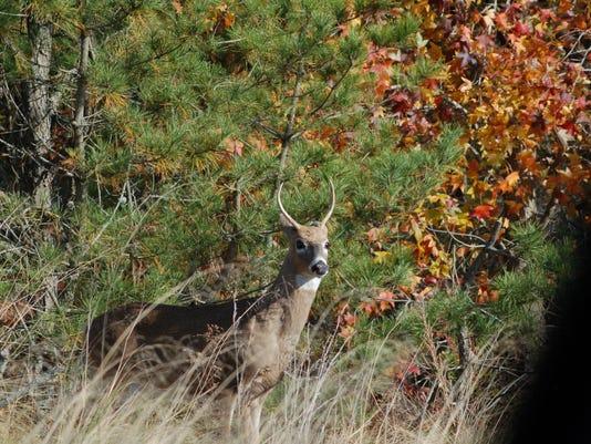 Cape Henlopen Buck 3