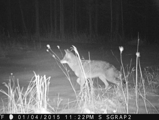An entry in the Jan./Feb. 2015 trail camera photo contest