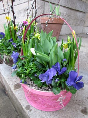 Two white tulips and yellow daffodils form the middle and six blue pansies fill out a pink basket, perfect for spring or Easter.