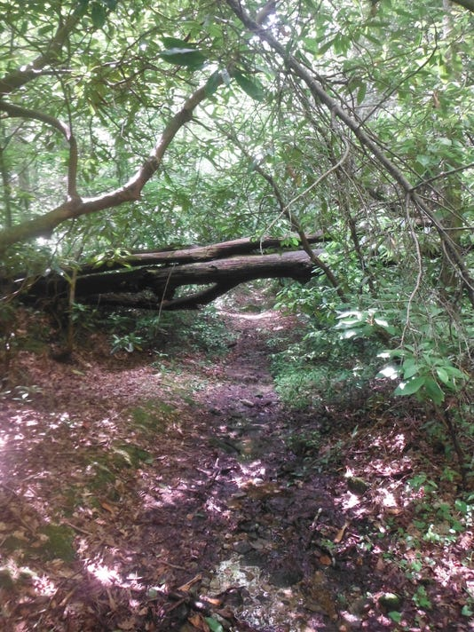6.14.14 Many obstacles along the trail..JPG