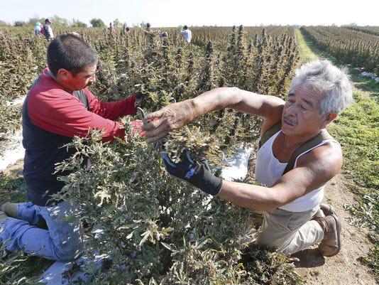 Kentucky farmers embracing stateÂ's growing hemp industry