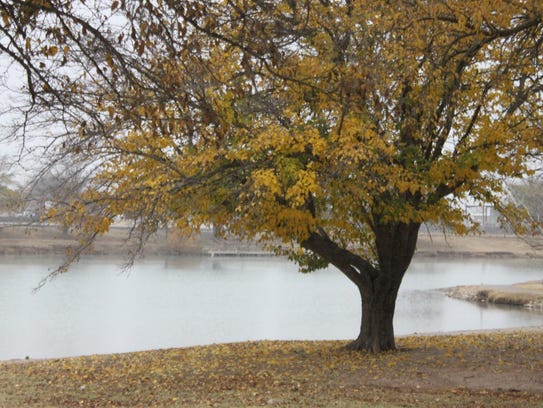 The leaves of a tree near the Pecos River turned a