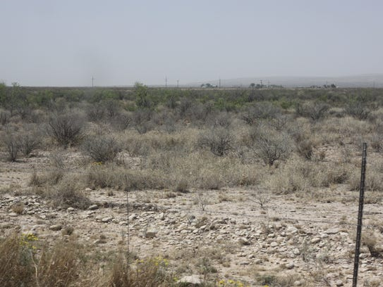 Invasive bushes are common in ranching areas where