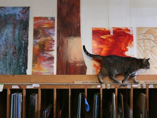 Maddie, the resident cat at Vidonish Studios, makes