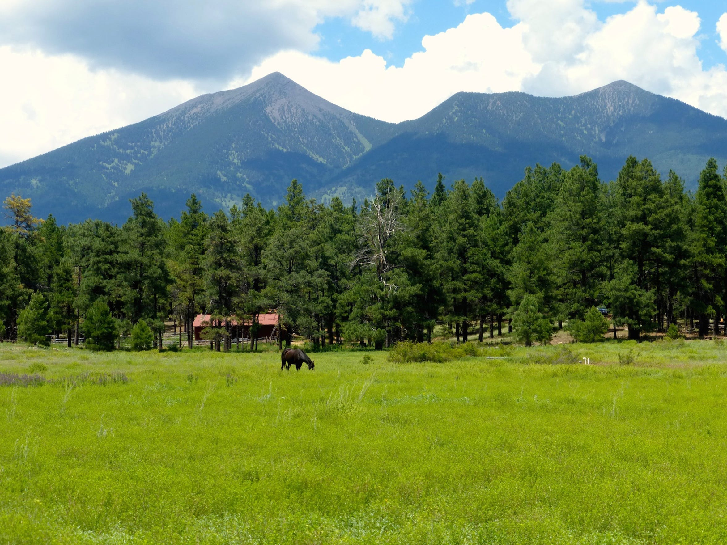 The San Francisco Peaks are the hulking remains of