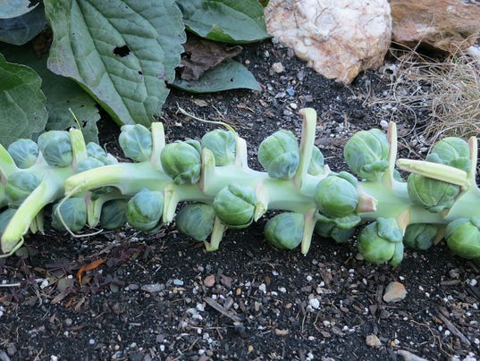 635832268368095982-151118-Food-FromScratchBrusselsSprouts02