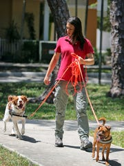 In a May 11, 2017 photo, Jamie Katz, South Florida's very own pet detective, walks with her two tracking dogs, Fletcher and Gable, in Fort Lauderdale, Fla. Katz has a total of four dogs, all of which are trained to find missing animals. She and her team of canines have found lost cats, dogs, parrots, and even a missing ferret.