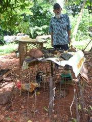 Larry Hernandez, 90, checks on chickens he raises outside