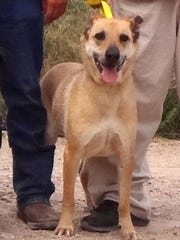 A blonde-colored mixed breed dog is among six set to
