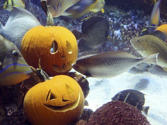 Underwater Jack O Lanterns