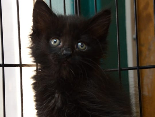 Leonard is available for adoption at the Animal Service