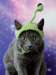 "Extraterrestrial from the book ""Cats in Hats,"" published by Running Press. The book released on March 24, 2015."