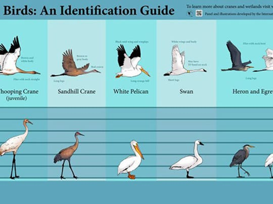 Bird identification chart