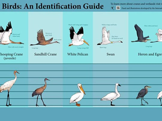 Bird identification chart