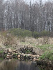 The embankment in Bear Creek on William Stack's property in the town of Linwood, Monday, April 25, 2016. Stack and his son, Ian Proctor added the embankment to preserve the marsh land on the property. Neighbors and farmers allege that the embankment has caused flooding and crop damage.