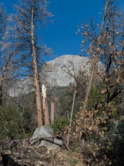 Dead trees frame Moro Rock in Sequoia National Park on Monday, February 5, 2018.  Officials are placing a number of fire restrictions within Sequoia and Kings Canyon national parks beginning Monday to reduce the risk of preventable blazes.