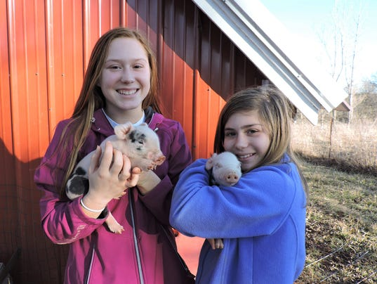 636536123050067753-girls-with-piglets.JPG