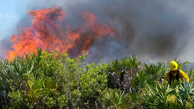 """""""Some things need fire to survive,"""" said Ryan Foley, an exotic plant technician for Florida Park Service District 5, who helped conduct a prescribed burn at Savannas Preserve State Park in Port St. Lucie in 2016."""