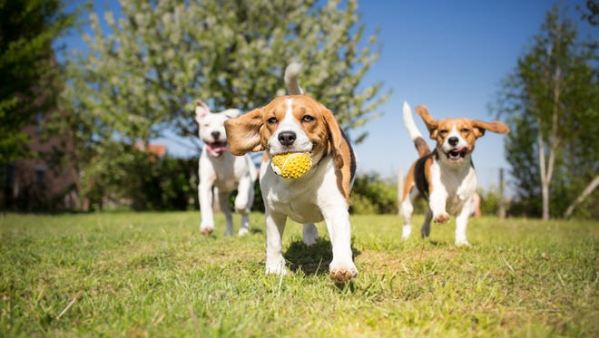 About 46 percent of pet owners in New Mexico have dogs.