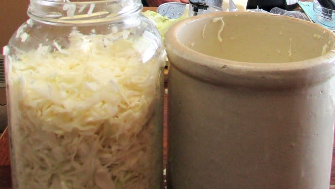Salted cabbage goes into containers as part of the sauerkraut making process.