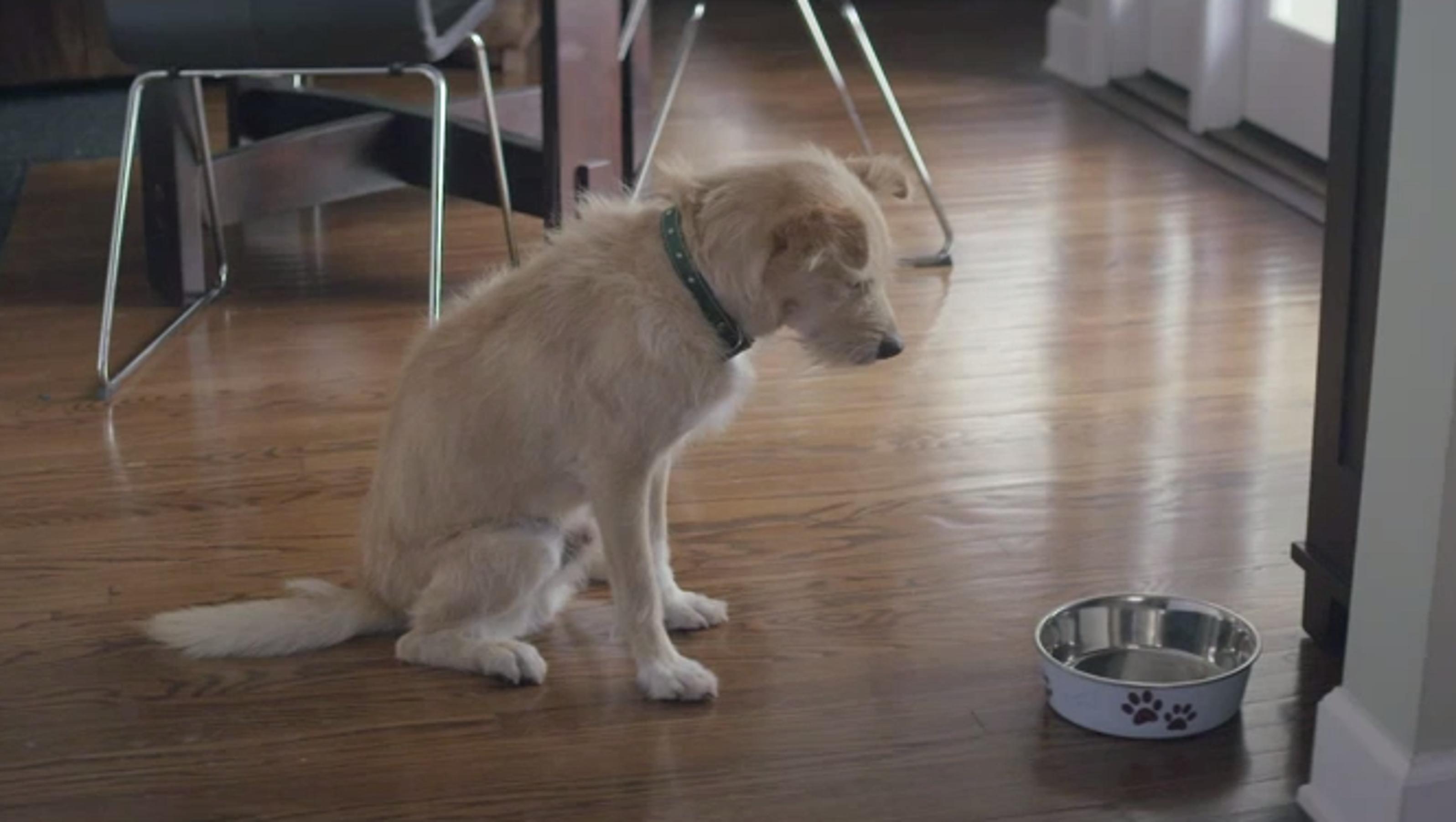 Sad Ads - Sad Dog