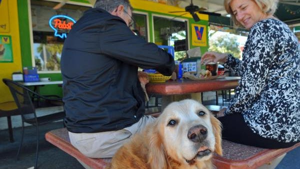 "Harry the golden retriever with John and Carol Church of Melbourne Beach, enjoying an outdoor lunch at Mustard's Last Stand in Melbourne. The ""snowbird"" couple also lives in Ludington, Michigan, where it is currently in the single digits for temperature, so the Brevard weather was not much of an issue for them."