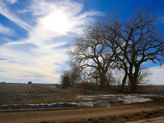 In this Jan. 16, 2015 file photo, trees dominate a field through which the Keystone XL pipeline is planned to run, near Bradshaw, Neb.