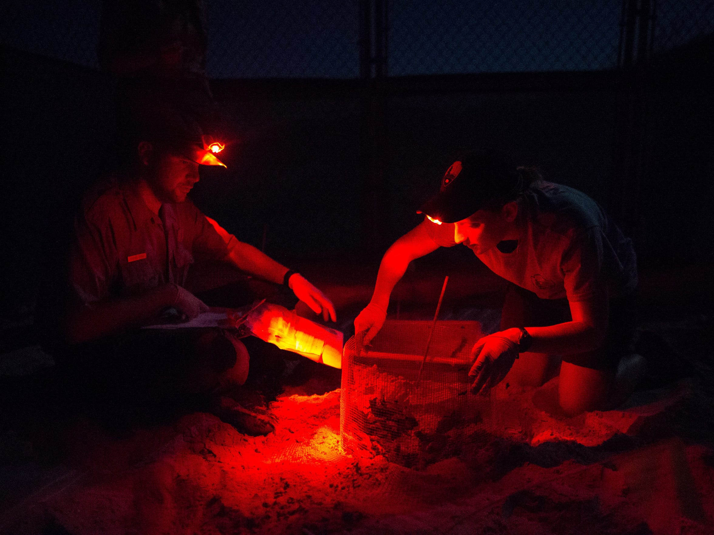Biological Science Technicians Meg Streich and Tom Backof use red headlamps for light as they prepare to remove turtle hatchlings from their nest. Tom found that the Kemp's ridley sea turtle hatchlings has emerged from their nest during his 2 a.m. check, Monday, July 18, 2016.