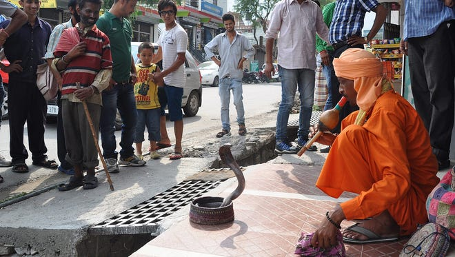 epa04305187 An Indian snake charmer entertains passers-by in Dharamshala, India 8th July 2014 by 'hynotising' a cobra with an instrument called pungi .