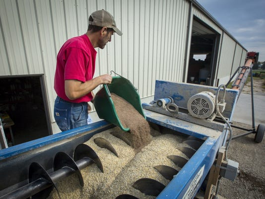 WSF 1027 Iowa oats 2.jpg