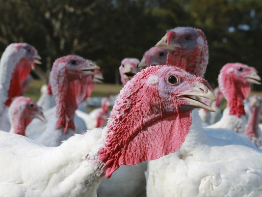 As Thanksgiving nears, regulators, food processors grapple with ongoing salmonella threat in turkeys