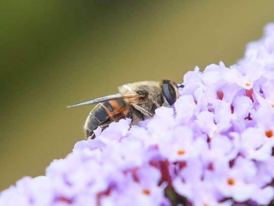 The plan put forward by a small environmental party and supported by campaign groups would set aside more space to protect imperiled insects and banish many pesticides from a third of Bavaria's agricultural land.