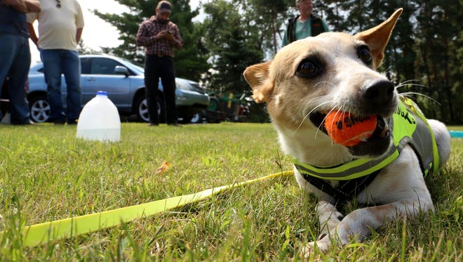 In a new survey of dog-happiest states, Michigan ranks 12th. Today is National Dog Day.