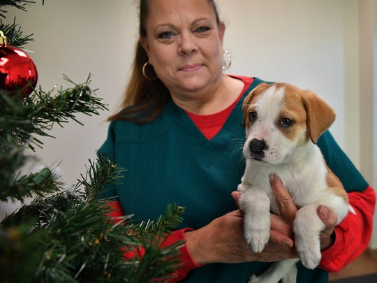 Diann Bowman, adoption counselor for the Wichita Falls Animal Services Center, holds a 10-week-old, male, mixed-breed puppy available for adoption. Puppies and kittens make popular Christmas gifts but may cause proplems with older existing pets in the household.